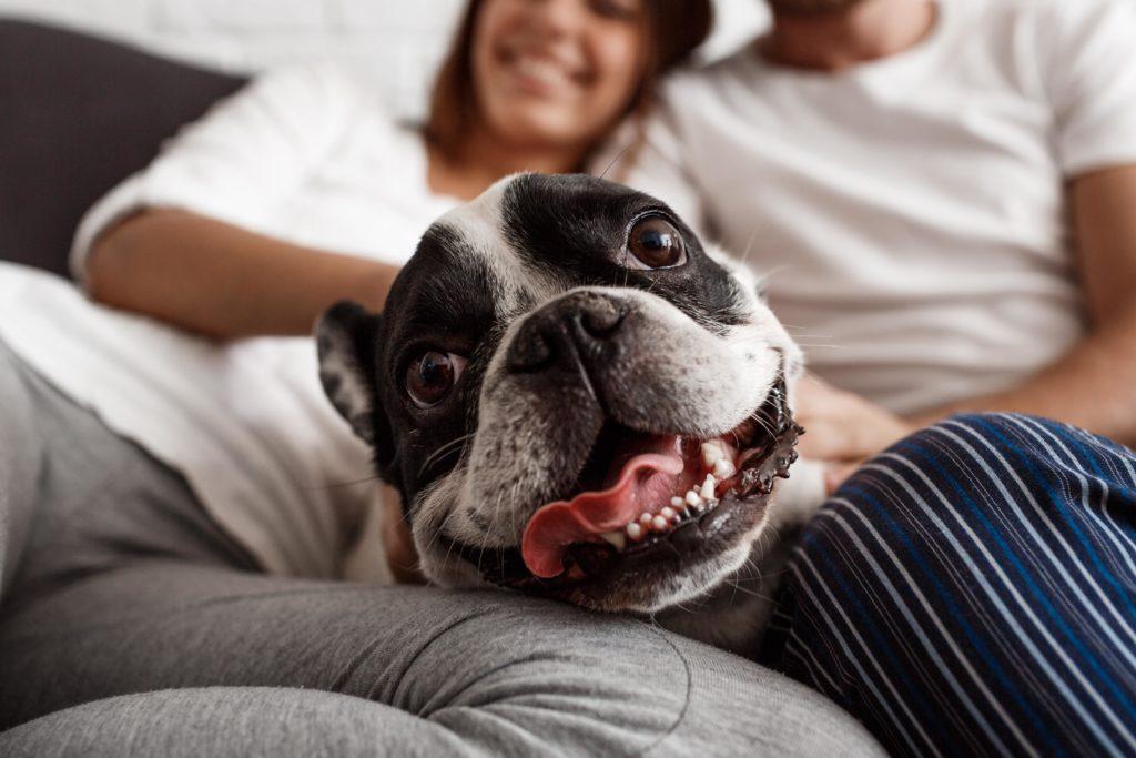 Comunicación canina perro tumbado