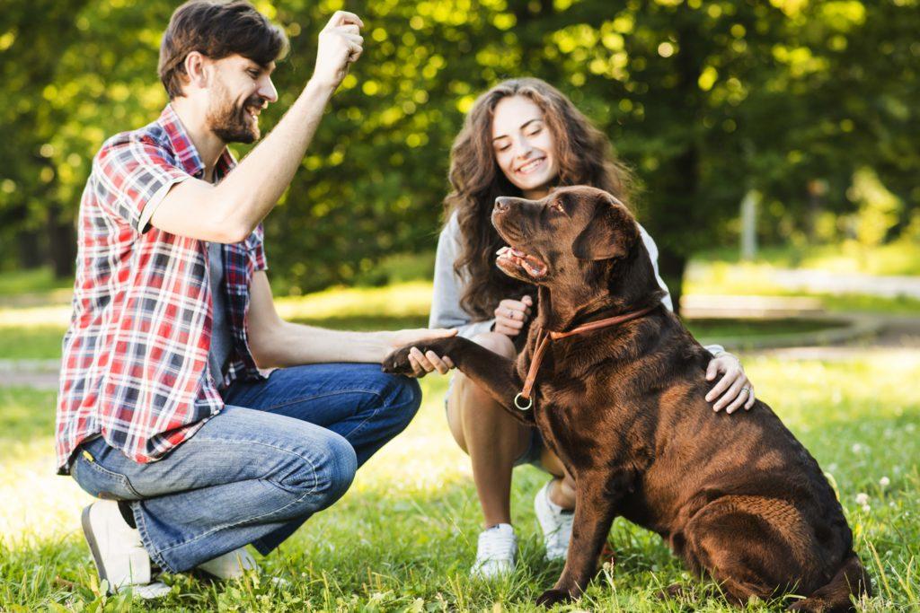 Lenguaje de los perros. 10 gestos que debes comprender