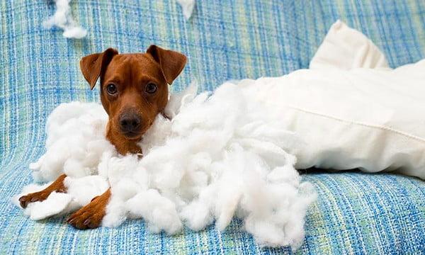 ansiedad perros en casa