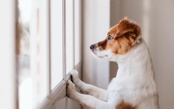 como saber ansiedad perros