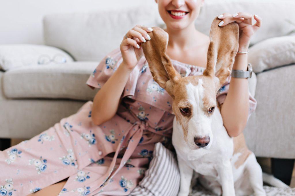 consejos para perros de pelo corto