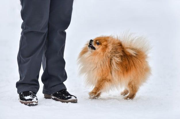 consejos abrigo perros invierno