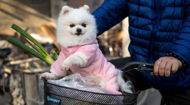 mejores abrigos para perros invierno