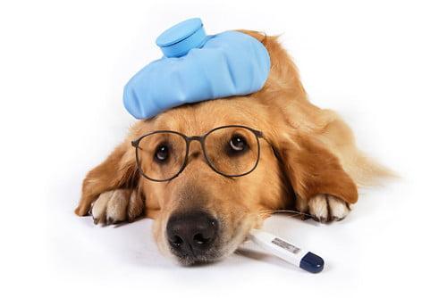 Qué es la tos de las perreras