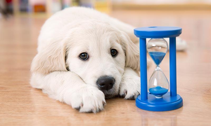síndrome abandono perros
