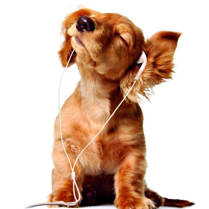 tratamiento ansiedad perros