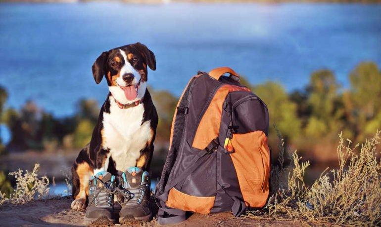 Asturias con perro