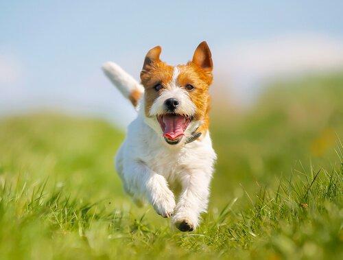 causas estreñimiento perros