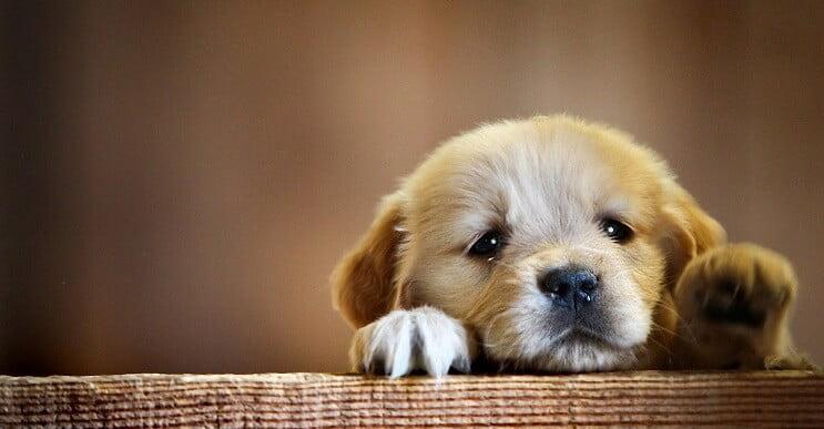 causas llorar perros
