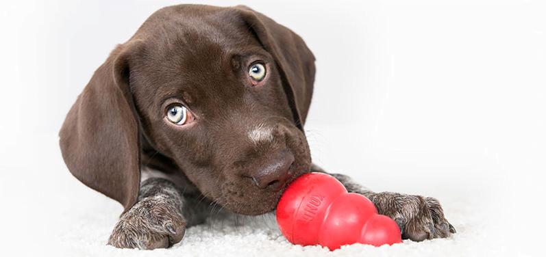comprar juguetes kong perros