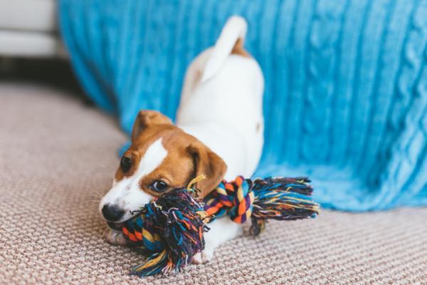comprar juguetes para perros