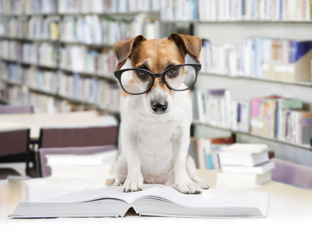 cuales son los perros más inteligentes