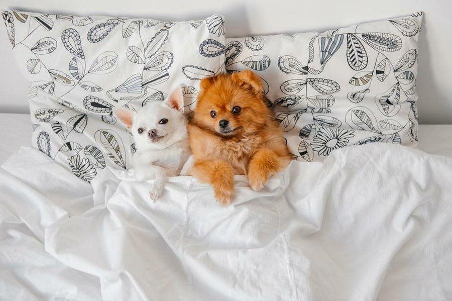 dormir bien perro
