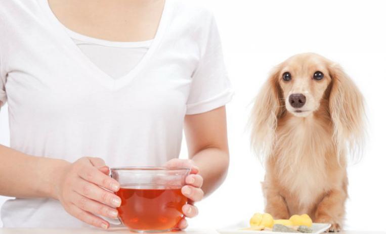 estreñimiento en perros de raza pequeña