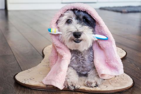 limpiar sarro dientes perros