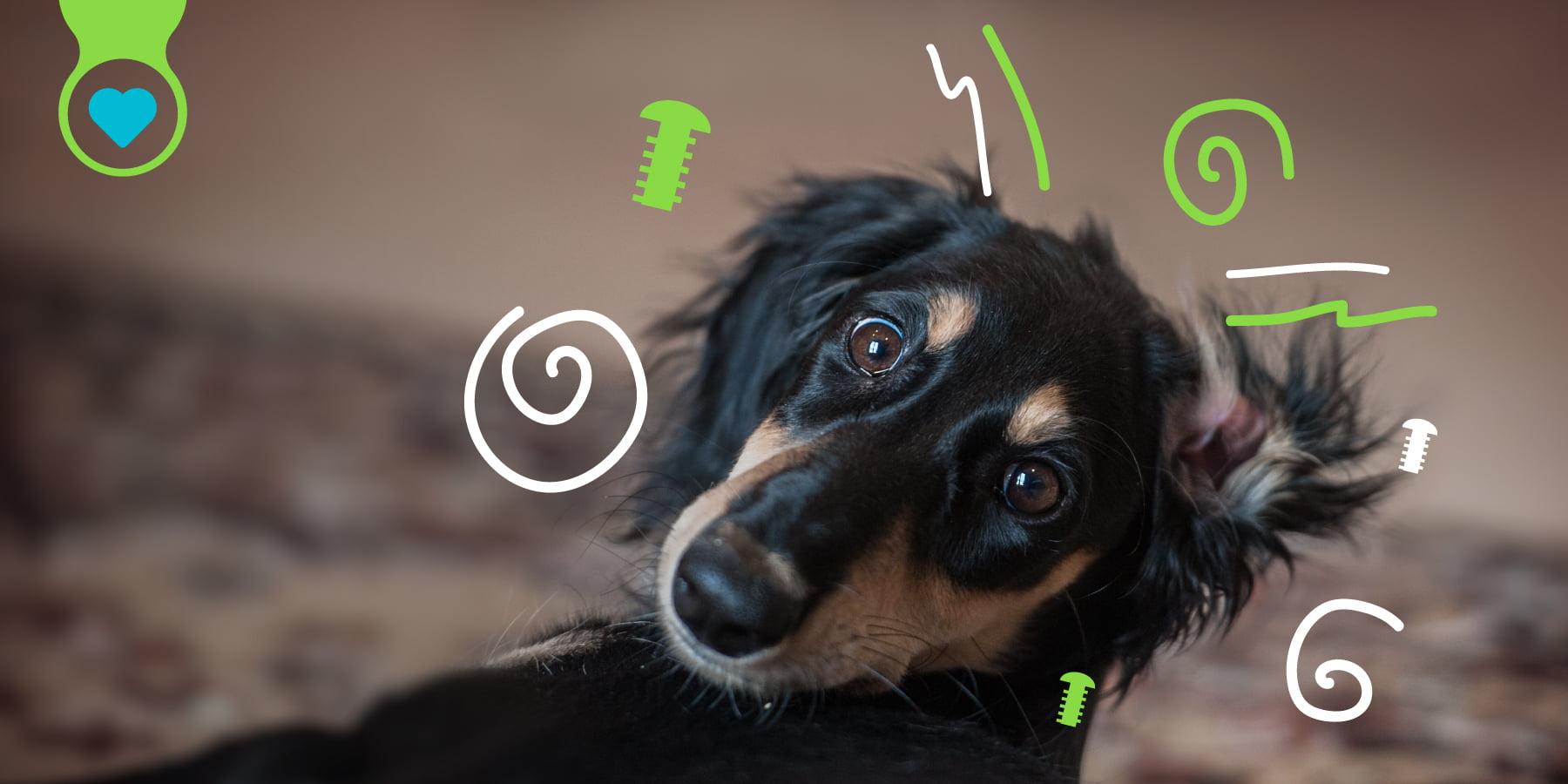 Perros hiperactivos