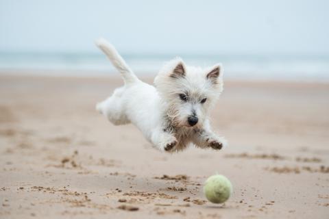 playas para perros Asturias