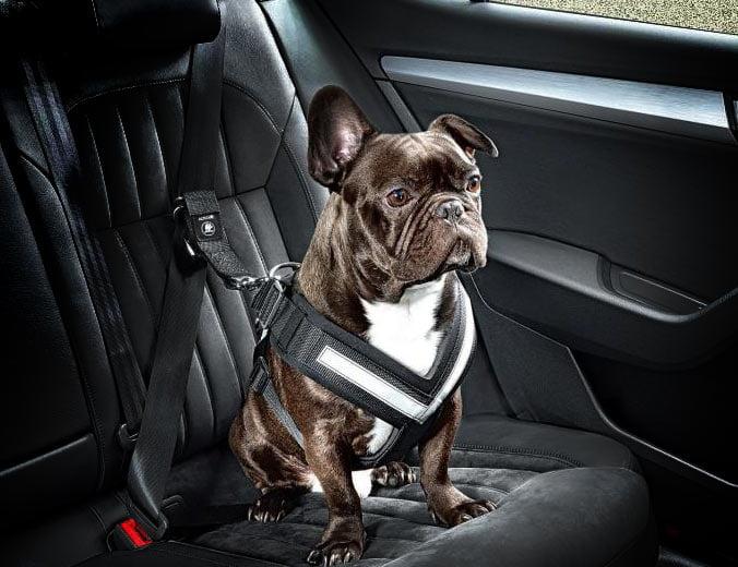 arnés coche perro