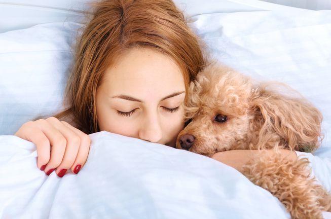 cómo dormir un perro