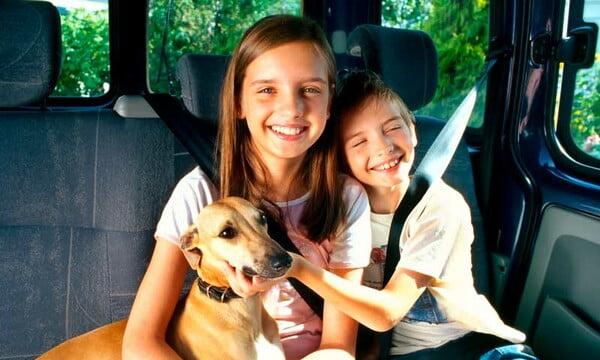 cómo viajar en coche con perro