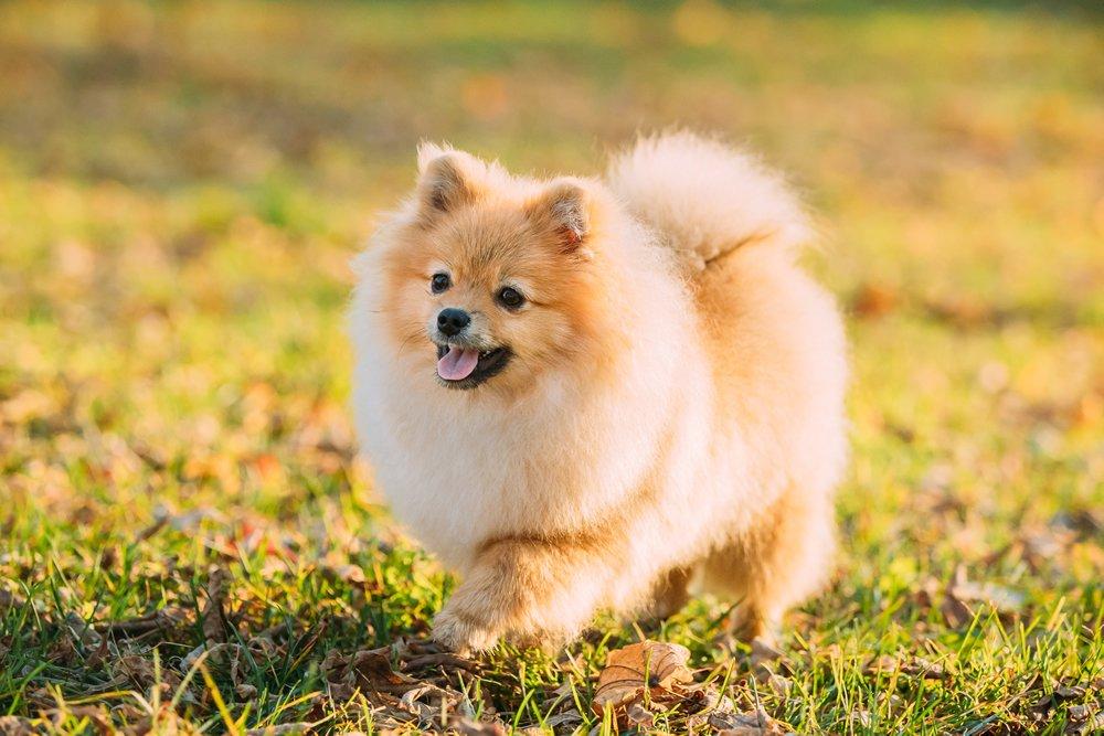 cuando pasear un perro