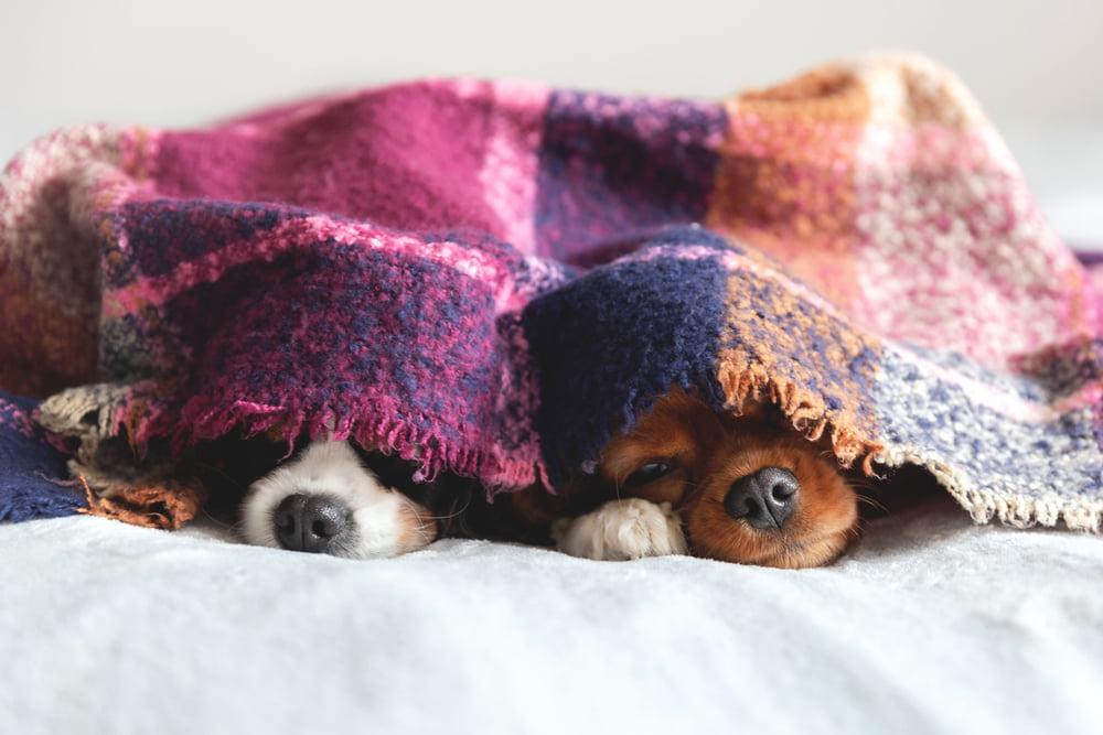 cuánto duermen los perros