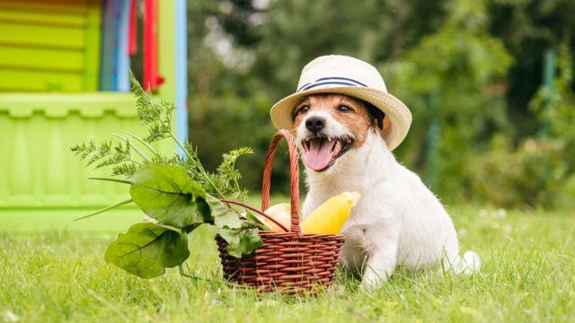 la digestión en los perros