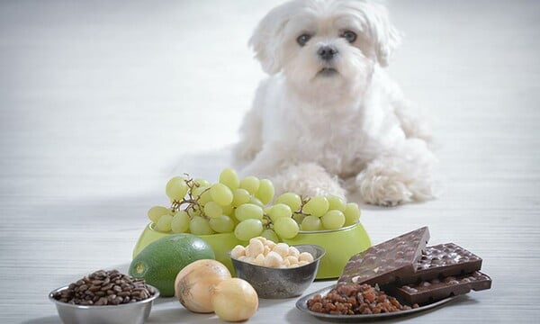la mejor alimentación para perros