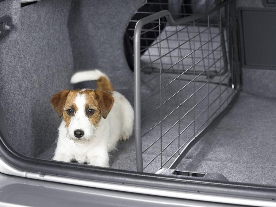llevar perro coche