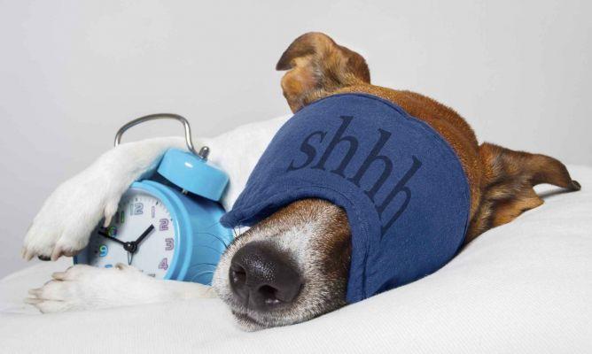 los perros duermen mucho o poco