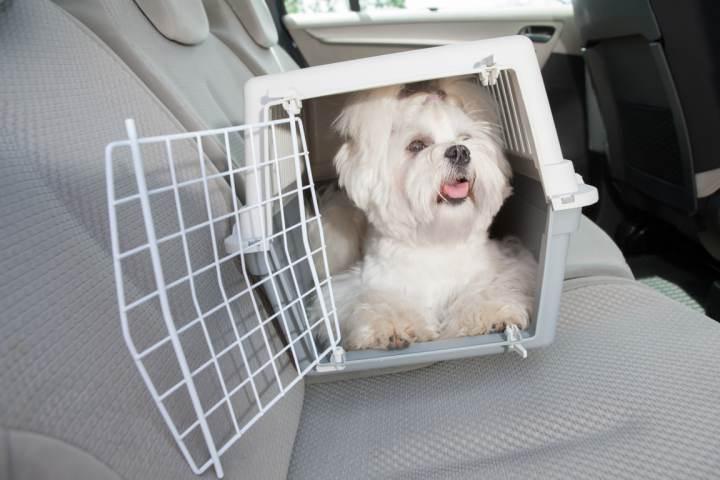 multa llevar perro en el coche
