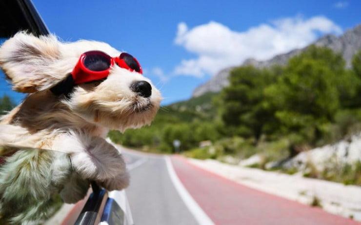 normativa para llevar perros en el coche