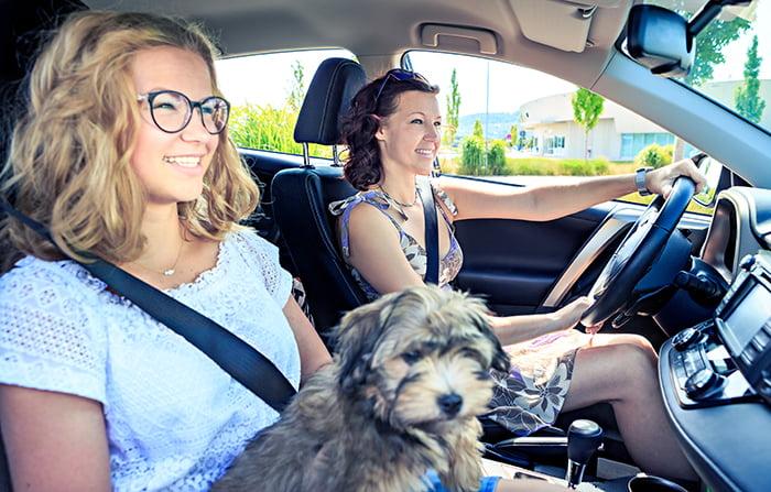seguridad vial perros