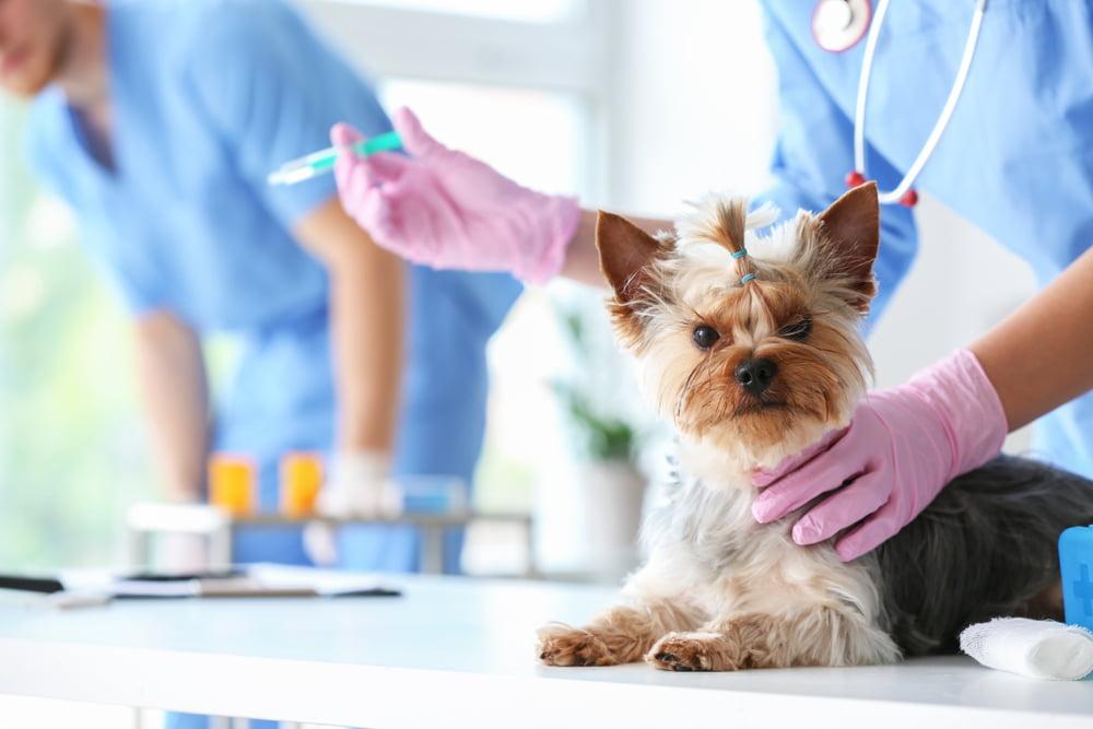 vacunas obligatorias perros