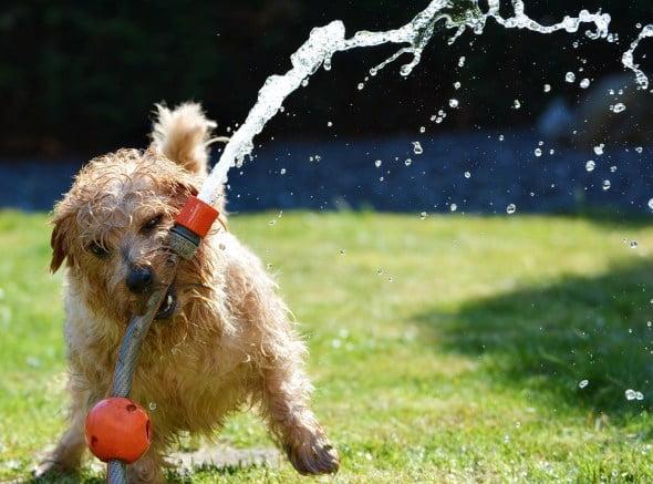 consejos perro verano