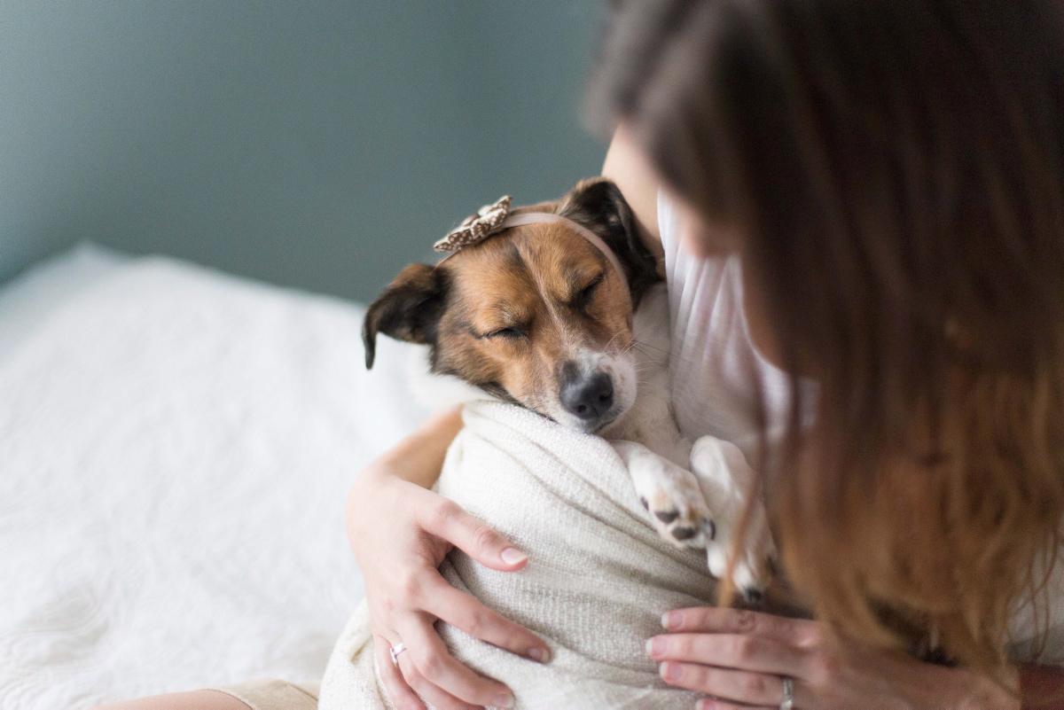 el síndrome del perro pequeño