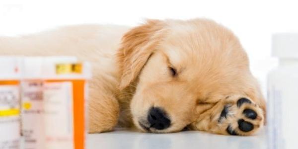 medicación moquillo perros