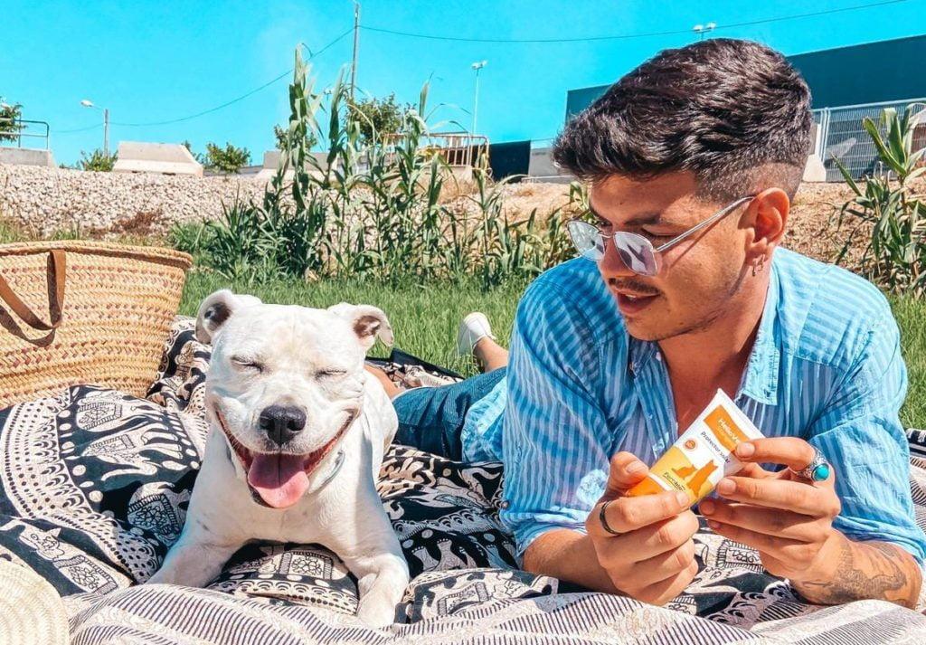 perro sin pelo en verano