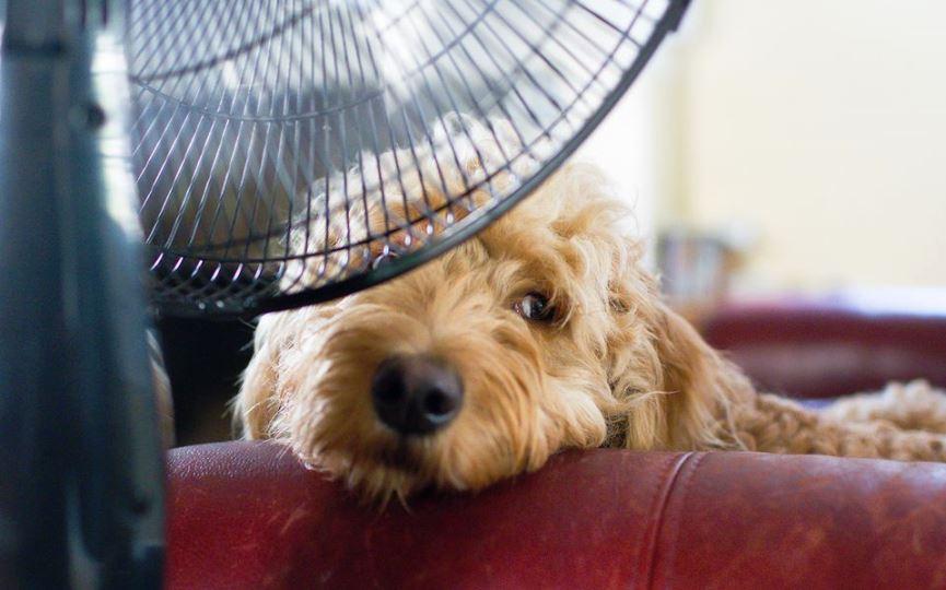 síntomas golpe de calor perros