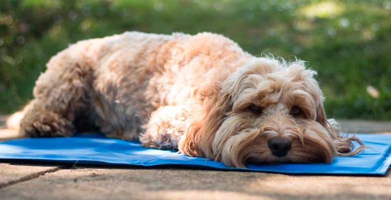 trucos perro calor verano