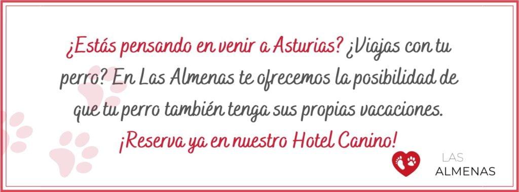 Hotel canino en Asturias