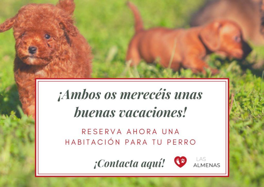 reserva hotel para perros en Asturias