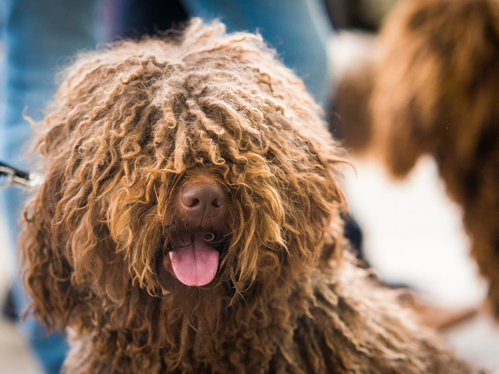 caída pelo perro