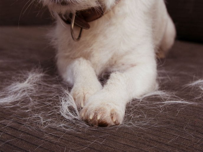 consejos muda pelo perro