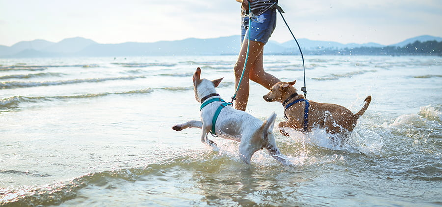jugar perro playa