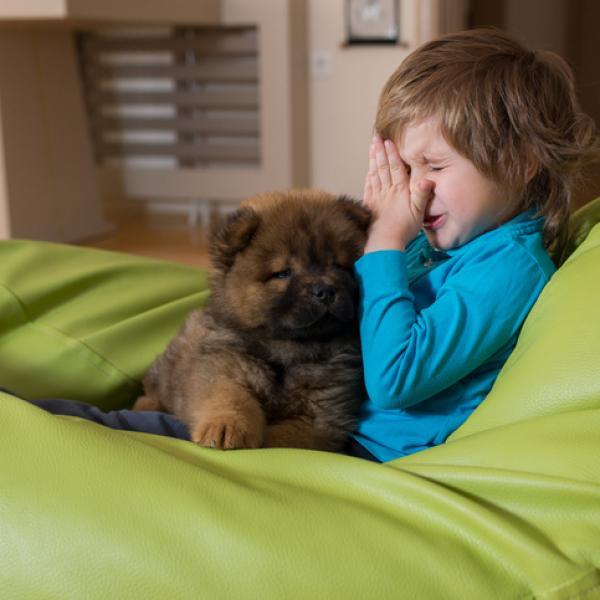 perros alergia humanos