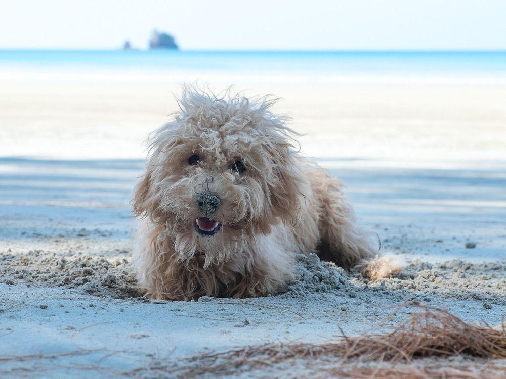 quemadura solar perros