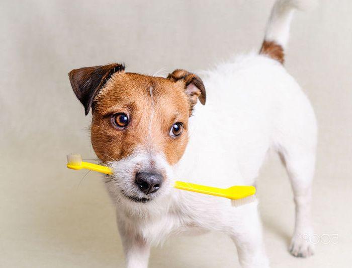 tratamiento mal aliento perros