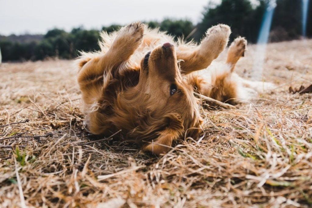 viajar con perro playa