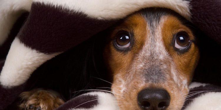 perros con miedo a los petardos